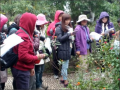 社團法人台灣蝴蝶保育學會